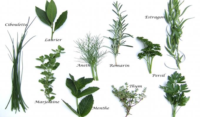 Astuce du jour comment faire s cher les herbes aromatiques for Plante aromatique cuisine