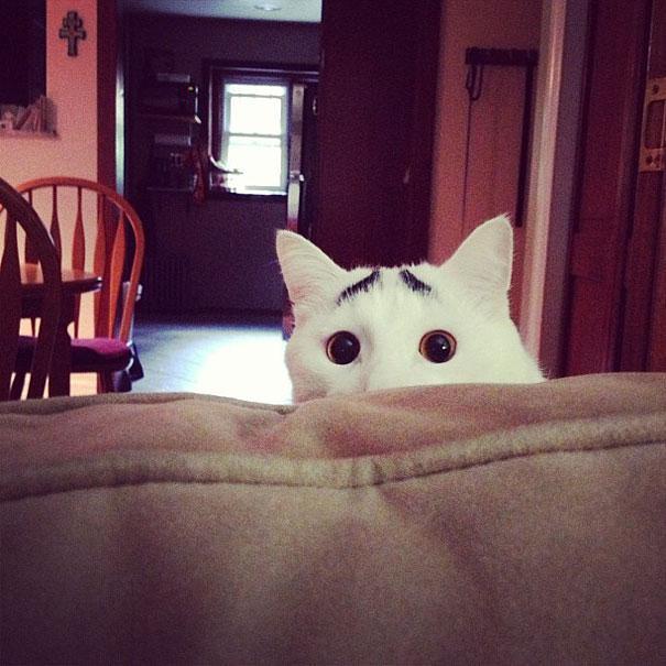 le chat aux sourcils drôles