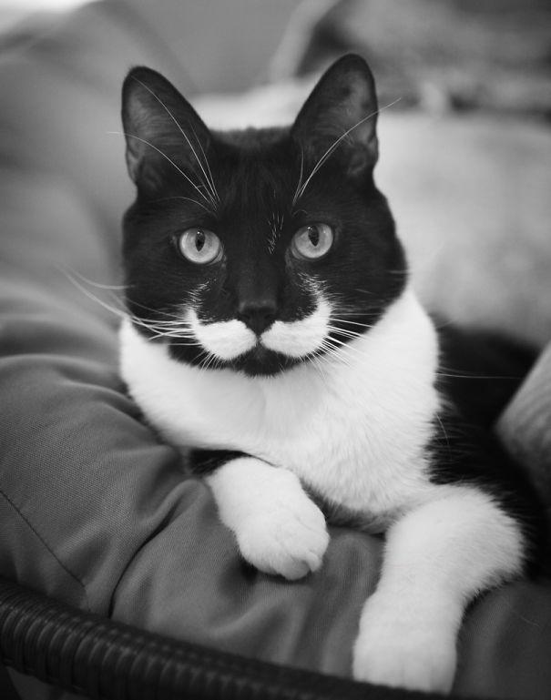 le chat à la moustache blanche