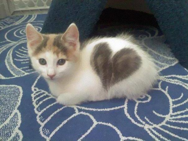 le chat au grand coeur
