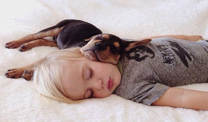 famille-enfant-bébé-chien