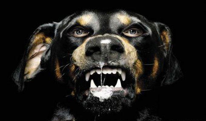 chien-rage