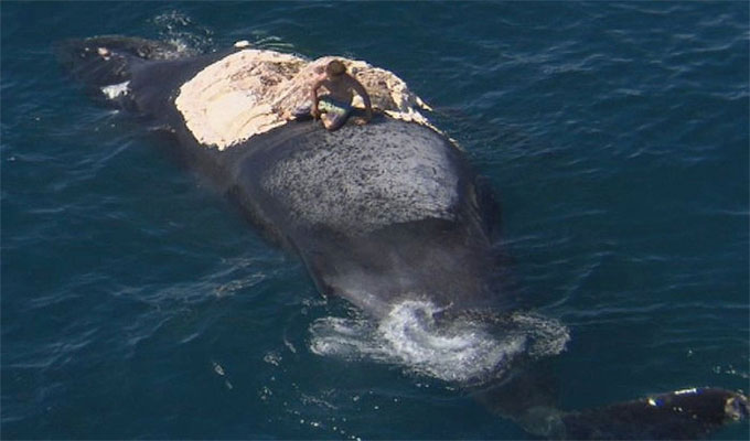 insolite-baleine