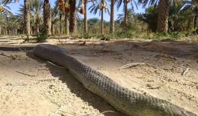 serpent-
