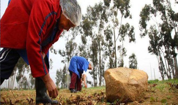 société-femme-agriculture