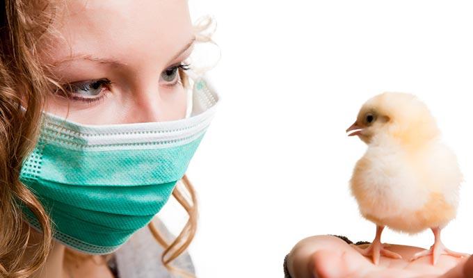 grippe-aviaire-h5n1