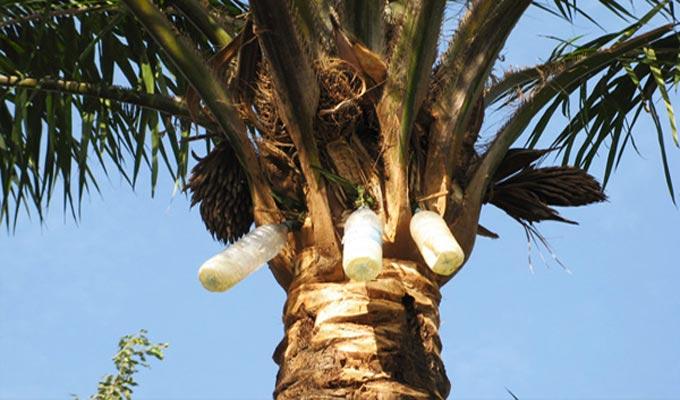 legmi-palme-sud-tunisie