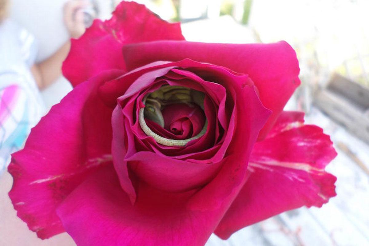L 39 image de la semaine un l zard somnole l 39 interieur d 39 une fleu - Interieur d une fleur ...